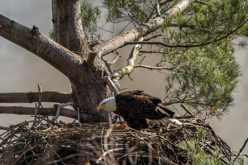 ulster-eagle-115.jpg