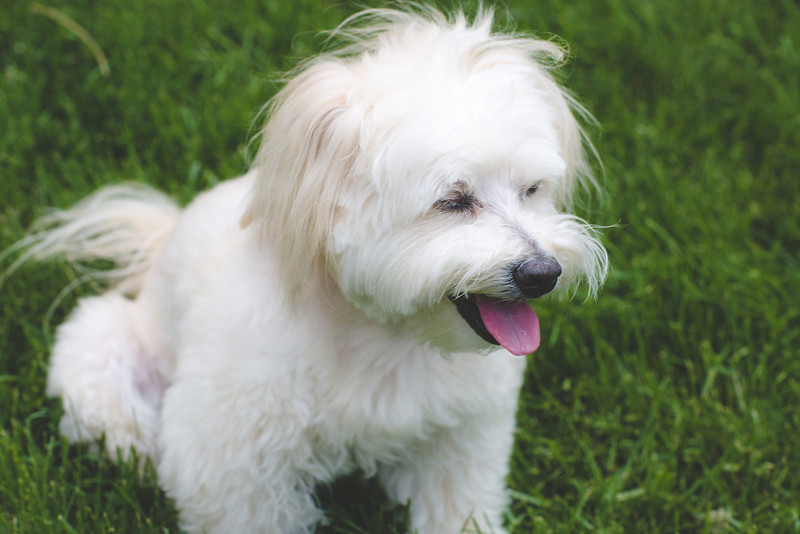 opal mike dogs (1 of 1)-85.jpg