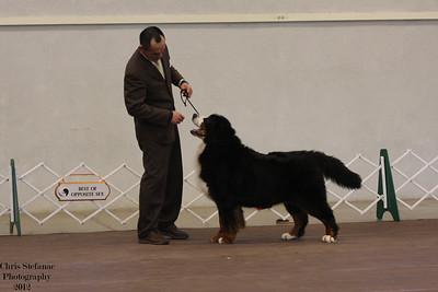 Veteran Sweeps 7-9 yrs Dog