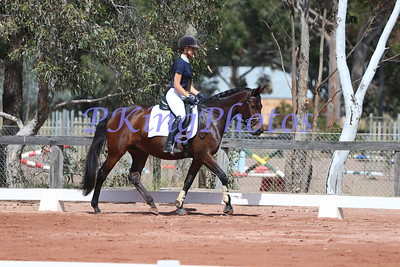 Swan River Dressage Protocol Sessions