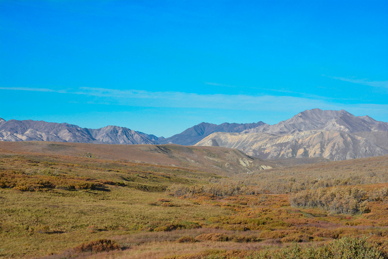 Denali-National-Park-74.jpg