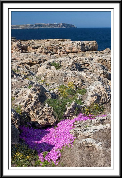 Cliff top flowers (42762852).jpg