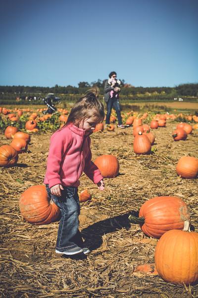 pumpkin picking 10-2016 _IMG_0826.jpg