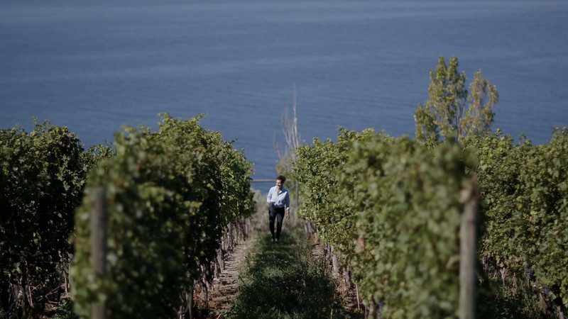 WINES OF BC BROLL7_walking through vineyard.mov
