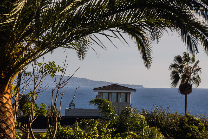 dec 13 - palm trees.jpg
