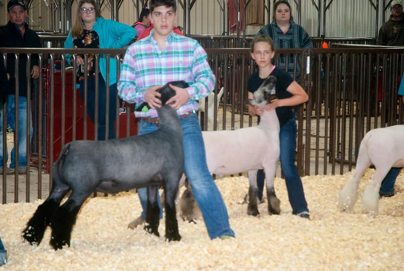 kay_county_showdown_sheep_20191207-112.jpg