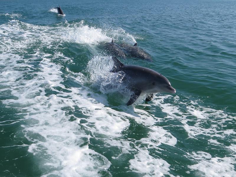 Dolphin_0779.JPG