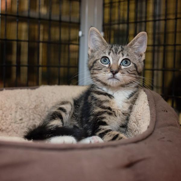 Gregson SAFE Haven for Cats June 9, 2014-06_09_14-32.jpg