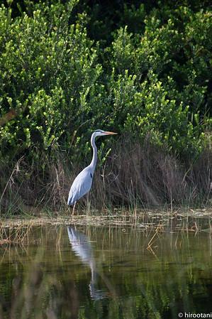 141230 Everglades NP