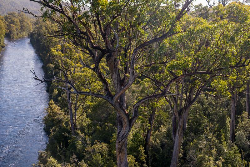 Tasmania-54.jpg