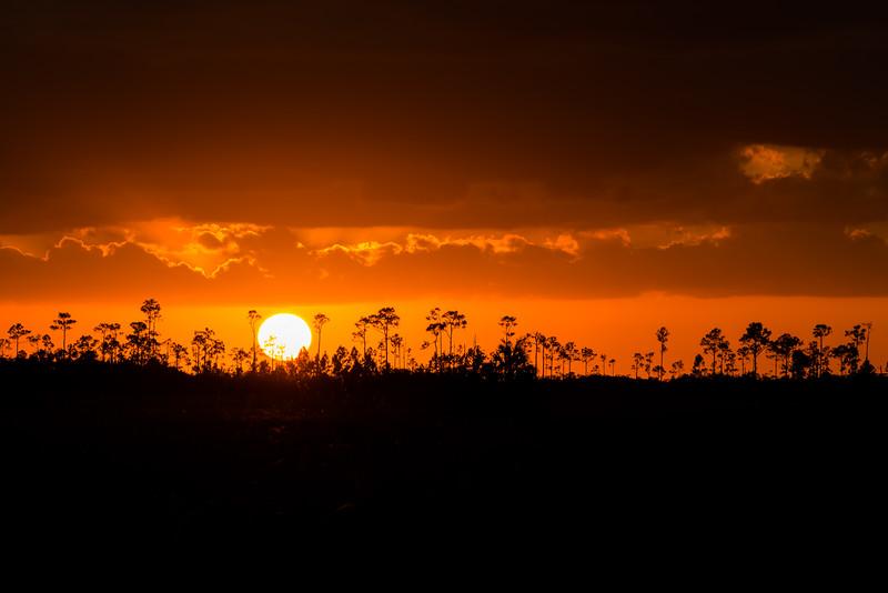 Everglades (22 of 60).jpg