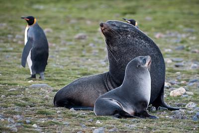 Antarctic Mammals