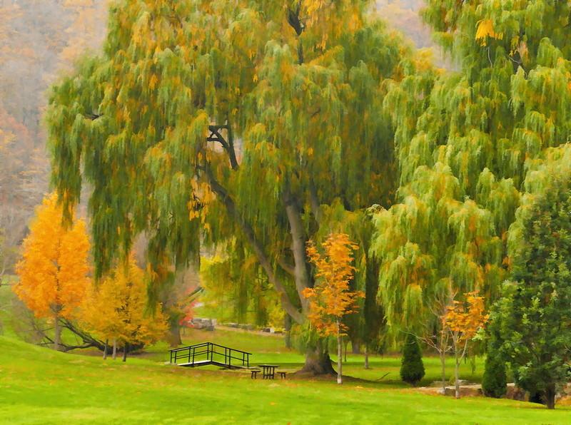 View in the Park Simplified.jpg