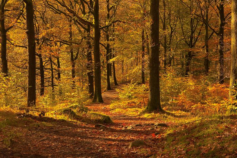 Grassmere woods 1.jpg