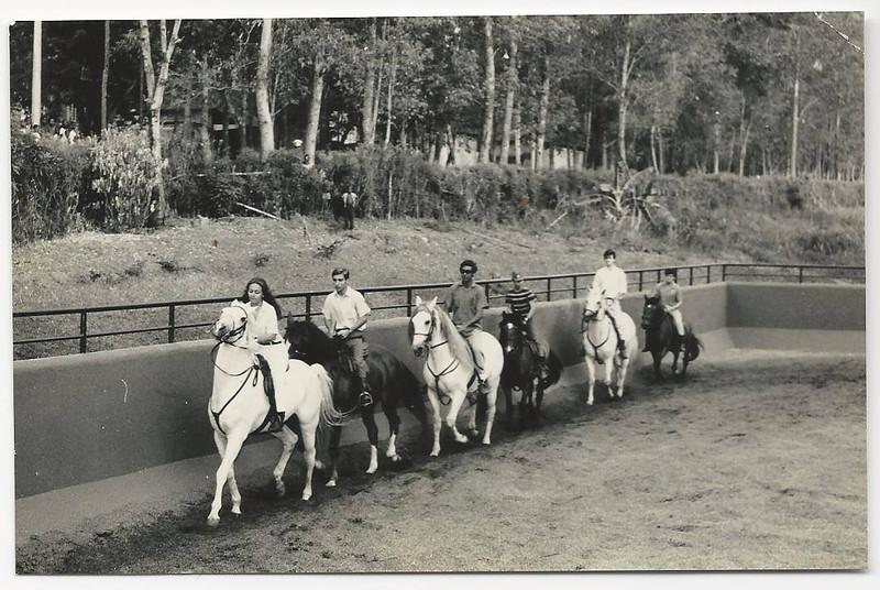 nos cavalos Mina.jpg