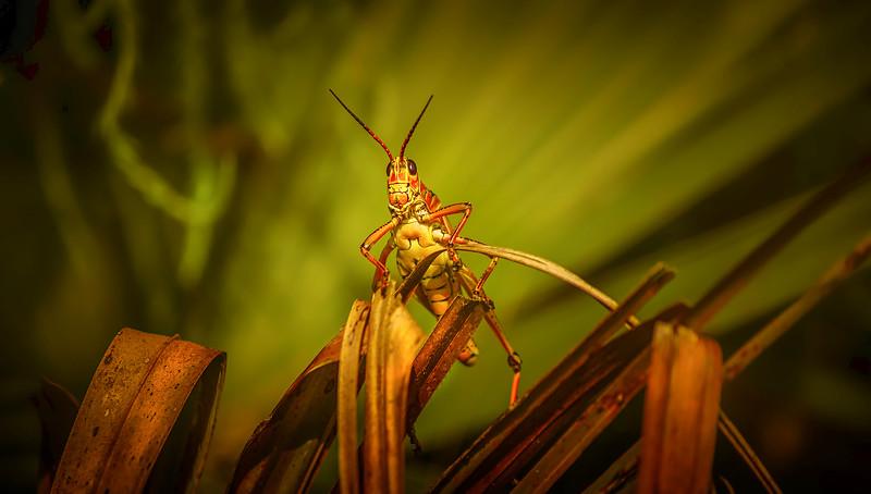 Grasshoppers 3.jpg