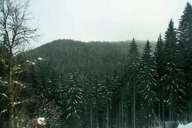 Black Forest Line-7793.jpg