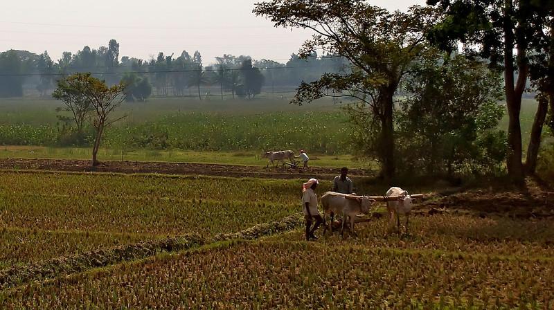 Bangalore India 2615.jpg
