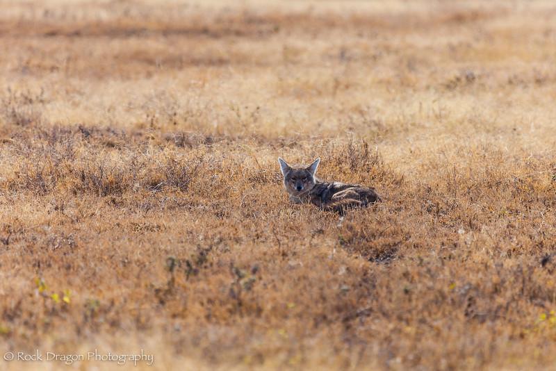 South_Serengeti-13.jpg