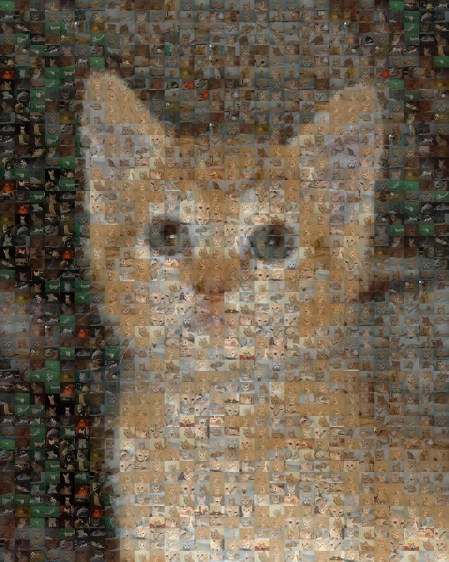 Mosaic made of about 2,500 pictures of Oliver.
