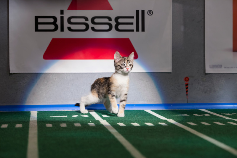 . Kitty half time show during Puppy Bowl IX(Photo credit: Animal Planet)