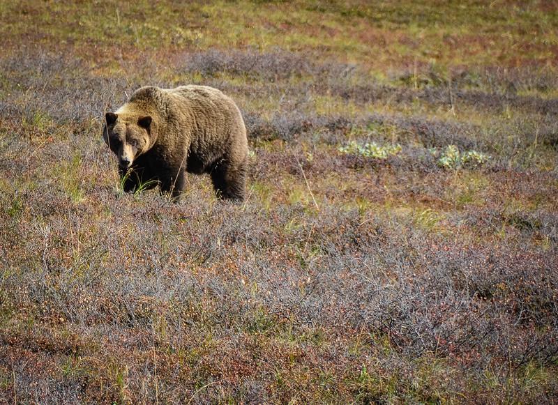 Denali-National-Park-143.jpg