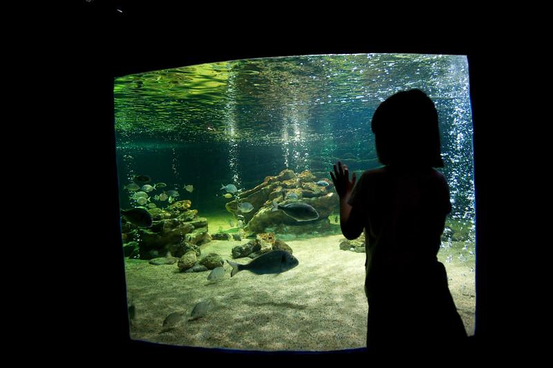 Girl admiring the aquarium, Zoomarine park, town of Albufeira, district of Faro, region of Algarve, Portugal