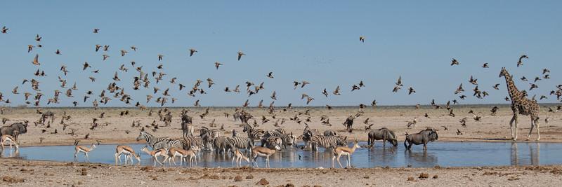TAKEN in NAMIBIA