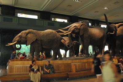 AMNH July 27, 2008