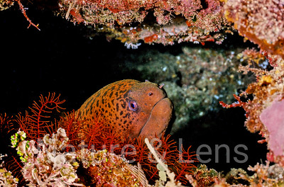 Underwater - Coral Sea
