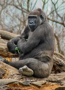 Zoo - Primates