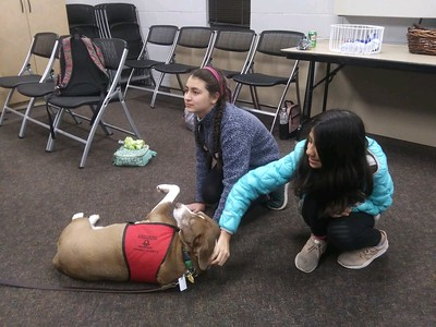 Animal Allies with the Greater Birmingham Humane Society