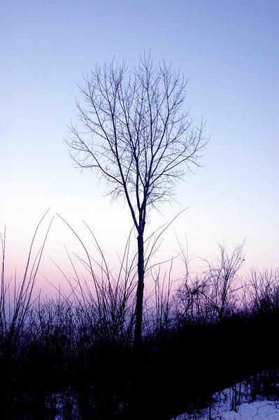 ZZ Tree blue sky .jpg