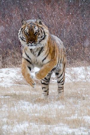 Animals of Montana 2007