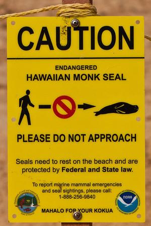 Monk Seal, Kauai, August, 2011