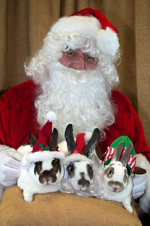 Animal Nature Holiday Bunny Party