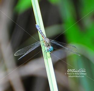 Flowers - Dragonflies