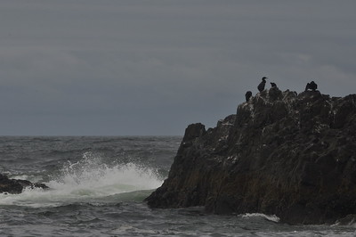 Seal Rock (29 Jun 11)