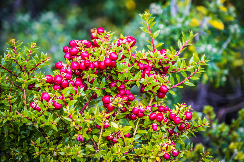 KMP-Ushuaia-32506.jpg