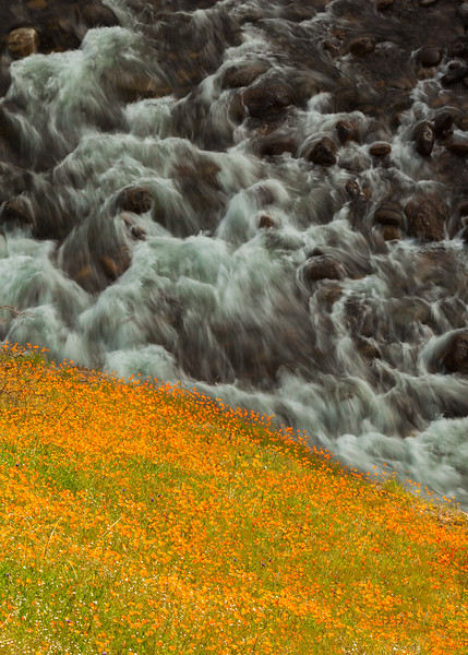 Poppies over Merced River, Hite's Cove