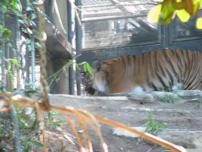 San Diego Zoo & Wild Animal Park
