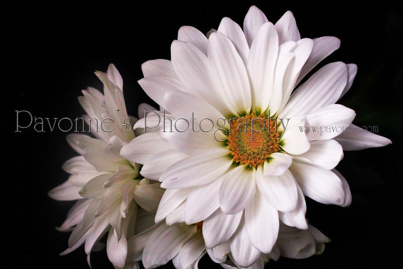 Flower One.jpg