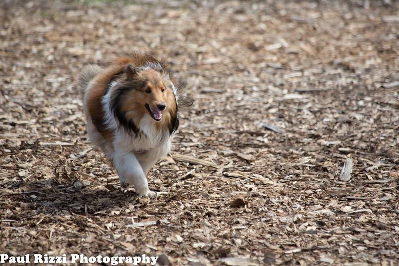 DogPark-9627.jpg