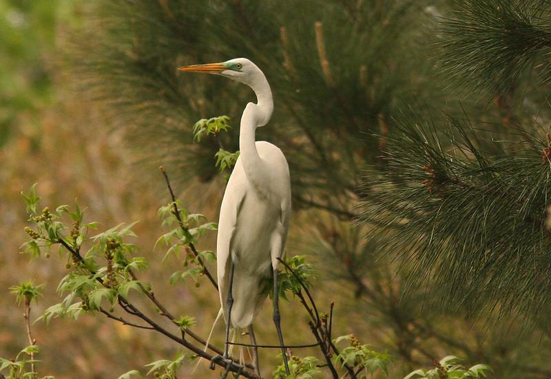 WB~Rookery Heron Woods SC~Carol Etch.jpg