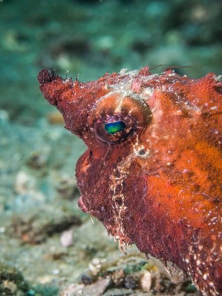Reef BHB 2016-7080106.jpg