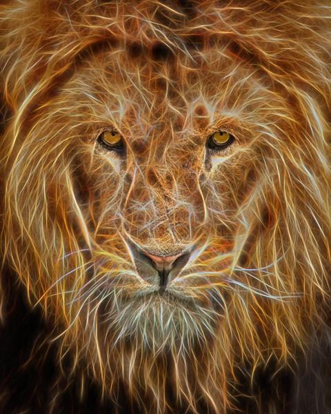 lion glow 1.jpg