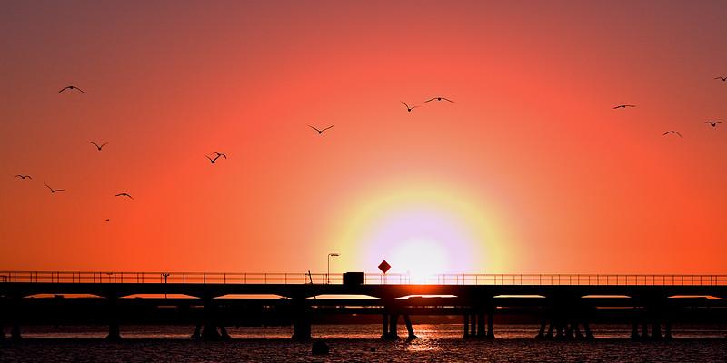 Seabird Sunset Silhouette