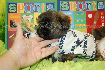 2010 DAISY PUPPIES  Photo and Video Galleries