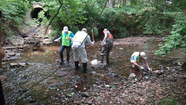 6.11.16 Stream Watcher Training Part 2 - Creek Scene Investigation along Deep Run