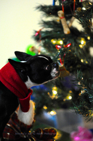 HOLIDAY DOGS MDPDT